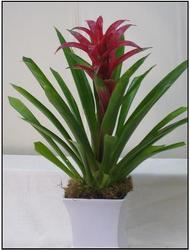 Bromeliad from Visser's Florist and Greenhouses in Anaheim, CA