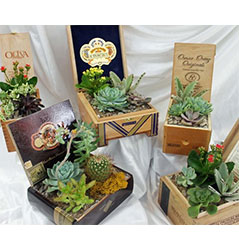 Cigar Box Succulents from Visser's Florist and Greenhouses in Anaheim, CA