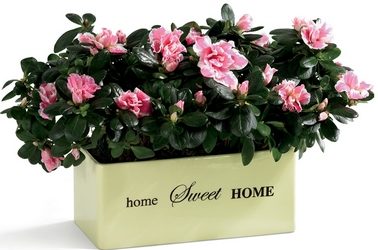 Home Sweet Home Planter from Visser's Florist and Greenhouses in Anaheim, CA