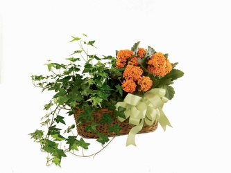 Kalanchoe & Ivy Planter from Visser's Florist and Greenhouses in Anaheim, CA
