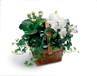 White Assortment Basket from Visser's Florist and Greenhouses in Anaheim, CA