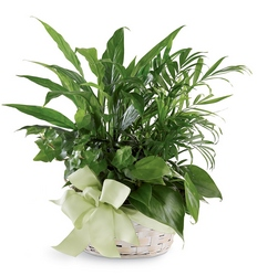Woodland Greens Basket from Visser's Florist and Greenhouses in Anaheim, CA