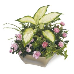 Garden of Grace Planter from Visser's Florist and Greenhouses in Anaheim, CA