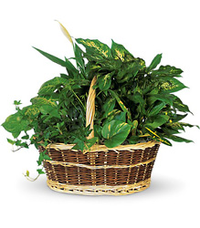 Large Basket Garden from Visser's Florist and Greenhouses in Anaheim, CA