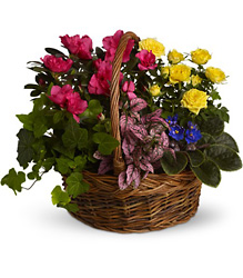 Blooming Garden Basket from Visser's Florist and Greenhouses in Anaheim, CA