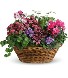 Simply Chic Mixed Plant Basket from Visser's Florist and Greenhouses in Anaheim, CA